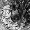02 - Hen Nesting in a Basket of Corn Husks