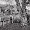 07 - Fence and Cottonwood, Bannack
