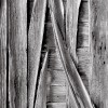 17 - Weathered Boards, Bannack